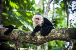 Viajes a Costa Rica fauna