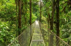 Viajes a Costa Rica flora